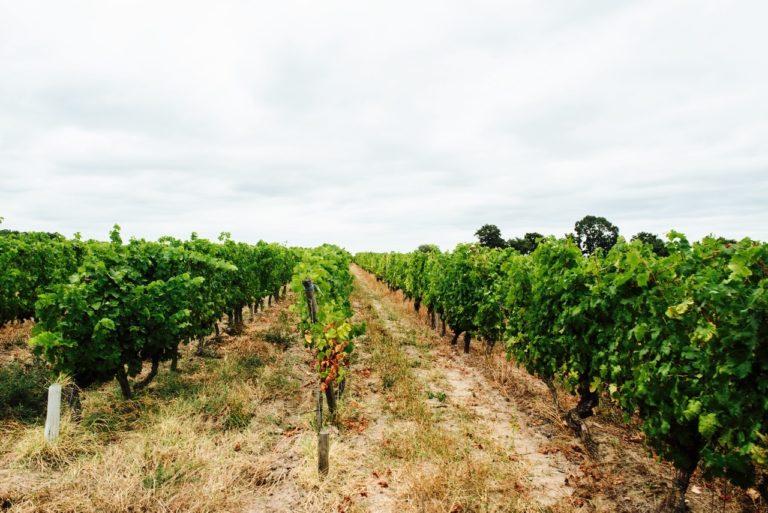Voyage Vin Loire Roches Neuves1